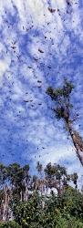 087_LZmN_52V Bat Migration