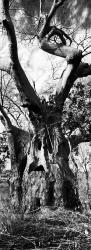 111A_LZmE_0409-25.3VBW Nanyuma Story Tree