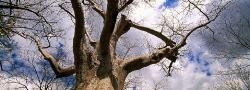 033_LZmE_29 Baobab & Sky