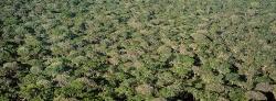 018_LZmMut_83 Miombo Woodland from above