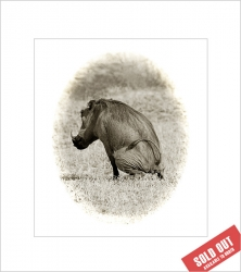 WILDLIFE - Mounted Prints