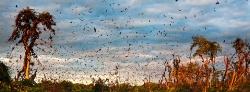 088_LZmL_456668A Bat Migration