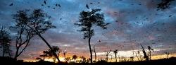 091_LZmL_451719A Bat Migration
