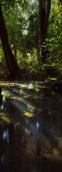 121A_LZmCb_7V 'Mushitu' Relic Rain Forest