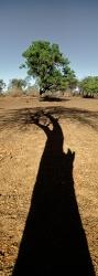 218_LZmE_364V Mchenja Shadow #2