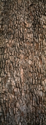 225_LZmE_378V Leadwood