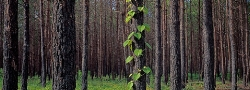 032E_LZmCb.3 Burnt Forest, New Life