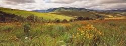 021_LMw_53 Nyika Plateau Grasslands