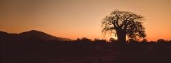 045_LZmE_140 'The Cathedral' Baobab at Dawn, Lower Zambezi