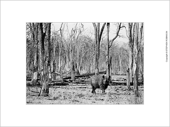 912_MR.BW.044-34A_MOUNTED PRINT-SALE-50x40cm_US$80